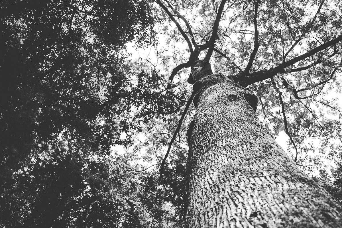 A black and white photo of a tree.
