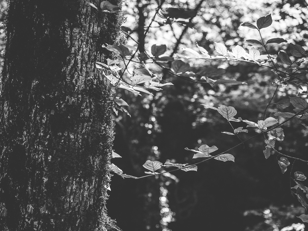 A black and white landscape and nature photo